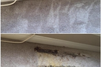 carpet-repaired-from-rust-stain-damage